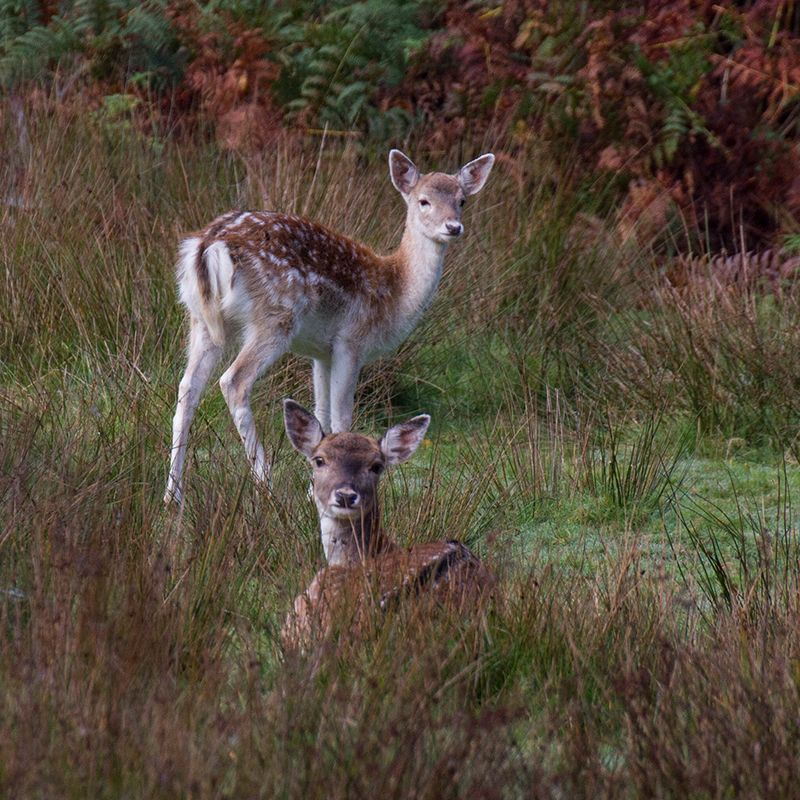 Bolderwood Deer Sanctuary Photos – Autum 2016