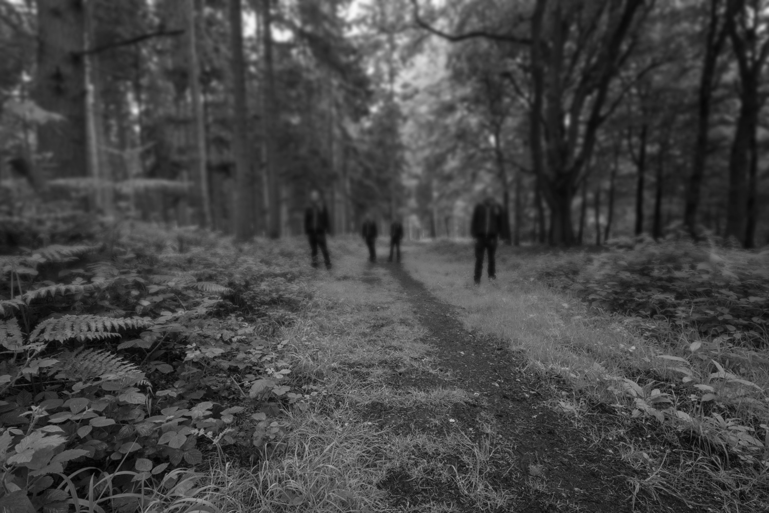 Crowsley Park Folk Horror 2